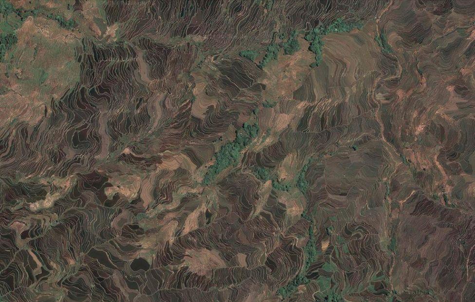 1709 Рисовые поля снизу и сверху