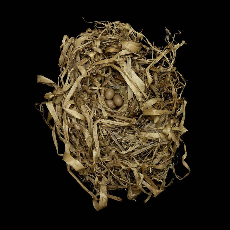 1720 Шедевры природной архитектуры   птичьи гнезда