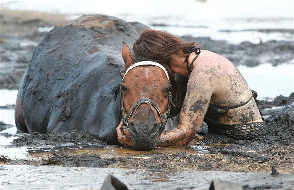 1802 Драма на пляже: Спасение лошади
