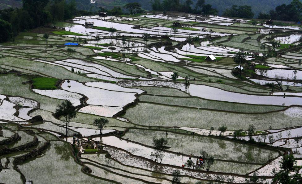 1979 Рисовые поля снизу и сверху