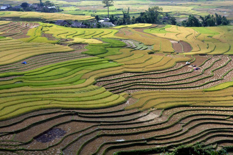 21125 Рисовые поля снизу и сверху