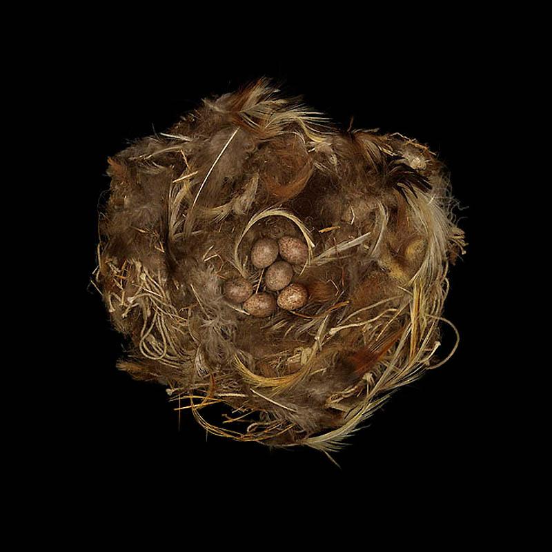 2141 Шедевры природной архитектуры   птичьи гнезда