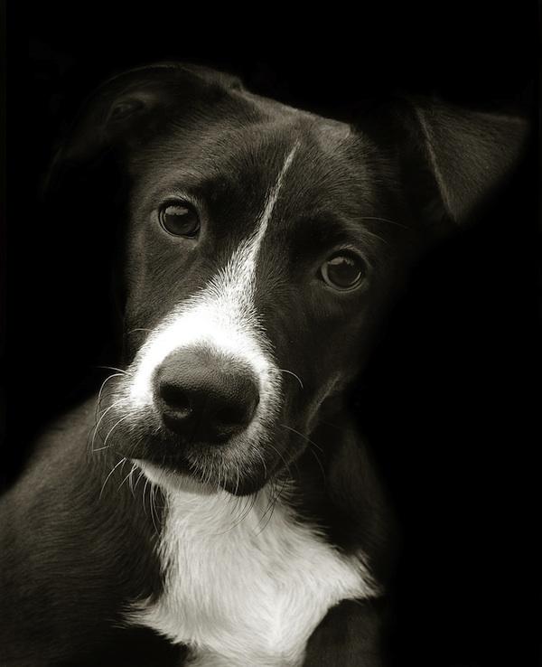 2157 Портреты собак из приютов