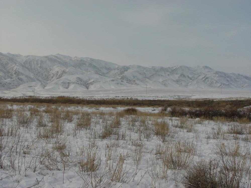 2195 Фоторепортаж с соревнований по охоте с ловчими птицами