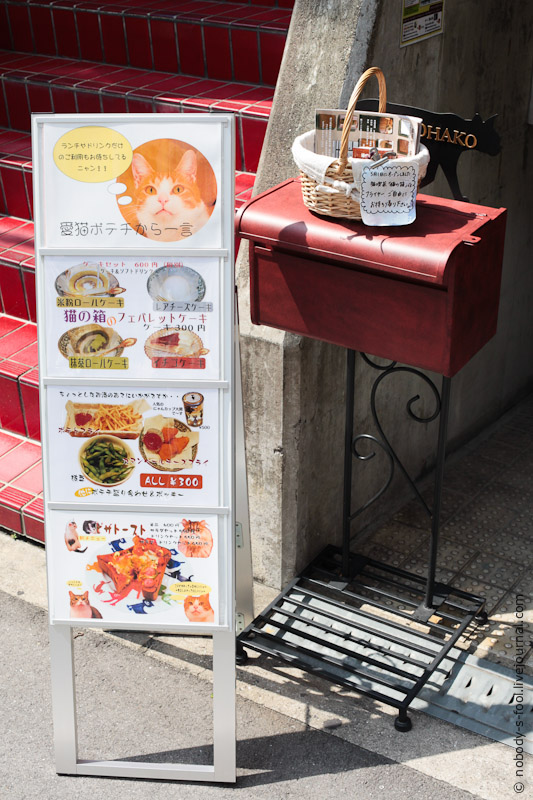 227 Кото кафе в Осаке   2