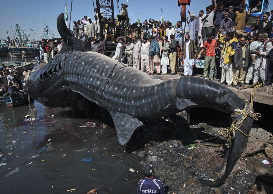 http://bigpicture.ru/wp-content/uploads/2012/02/227993-giant-whale.jpg