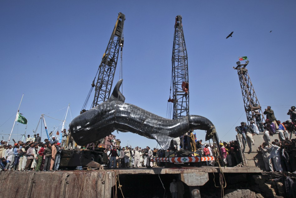 http://bigpicture.ru/wp-content/uploads/2012/02/227998-giant-whale.jpg