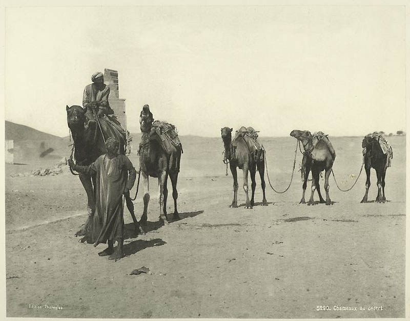 2312 Фотографии из Египта 1870 х годов
