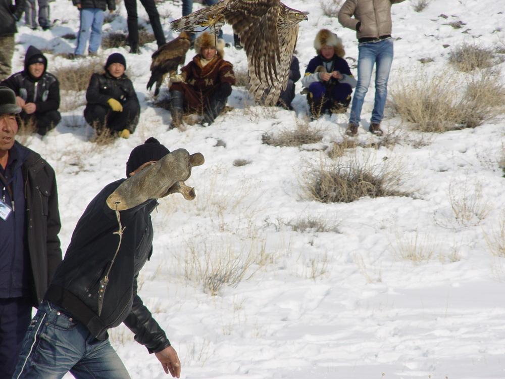 2343 Фоторепортаж с соревнований по охоте с ловчими птицами
