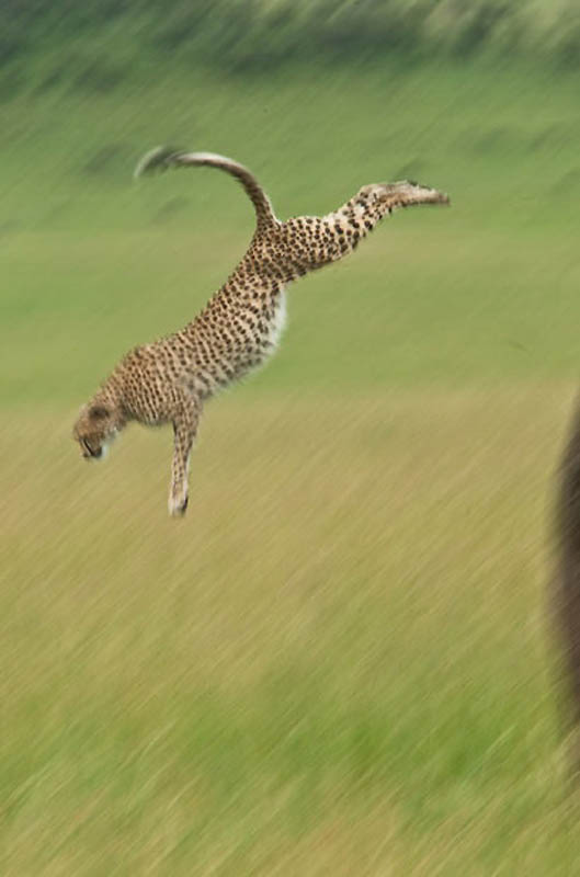 2374 Животные в полете