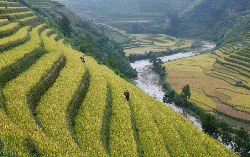 2383 Рисовые поля снизу и сверху