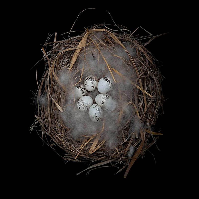 2416 Шедевры природной архитектуры   птичьи гнезда