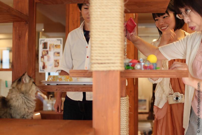 3110 Кото кафе в Осаке   2