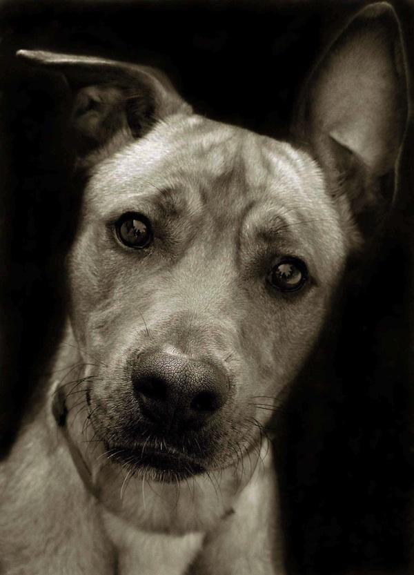 3119 Портреты собак из приютов