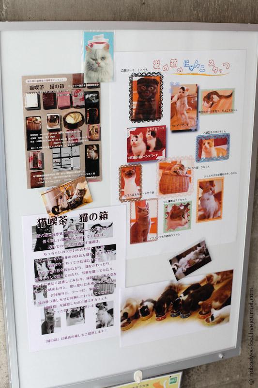 322 Кото кафе в Осаке   2