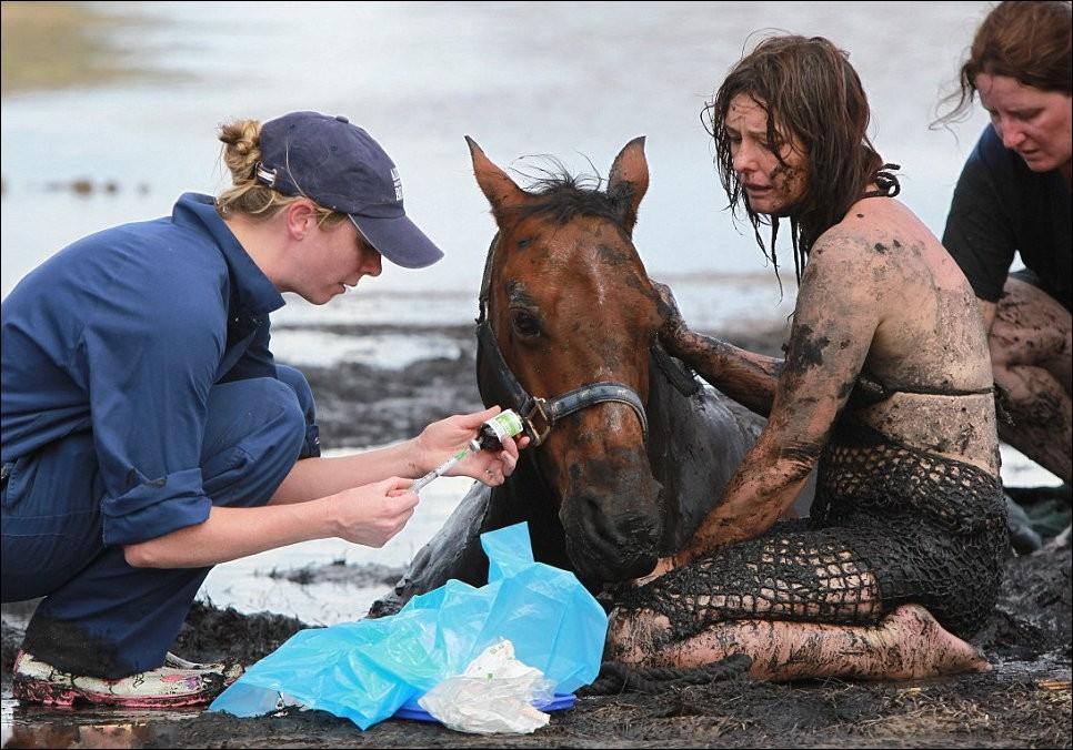 3267 Драма на пляже: Спасение лошади