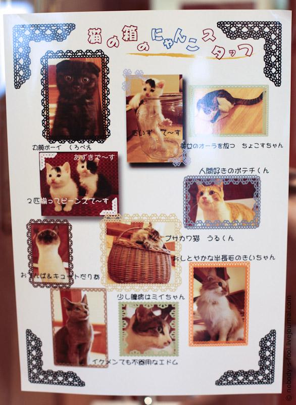 352 Кото кафе в Осаке   2