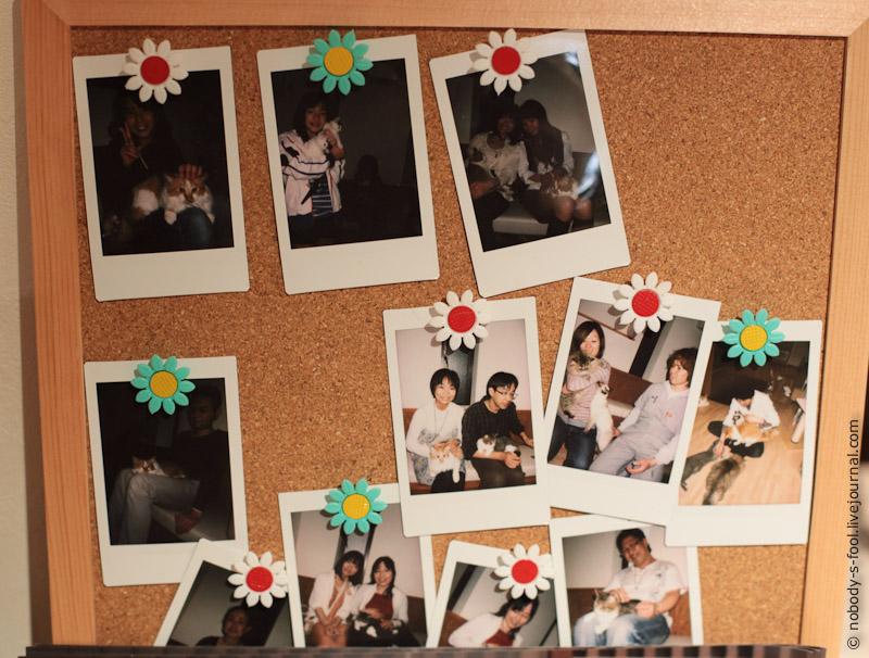 362 Кото кафе в Осаке   2