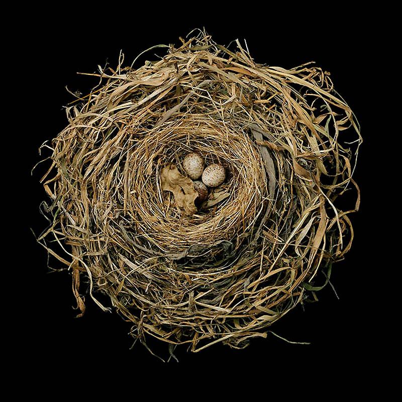 469 Шедевры природной архитектуры   птичьи гнезда