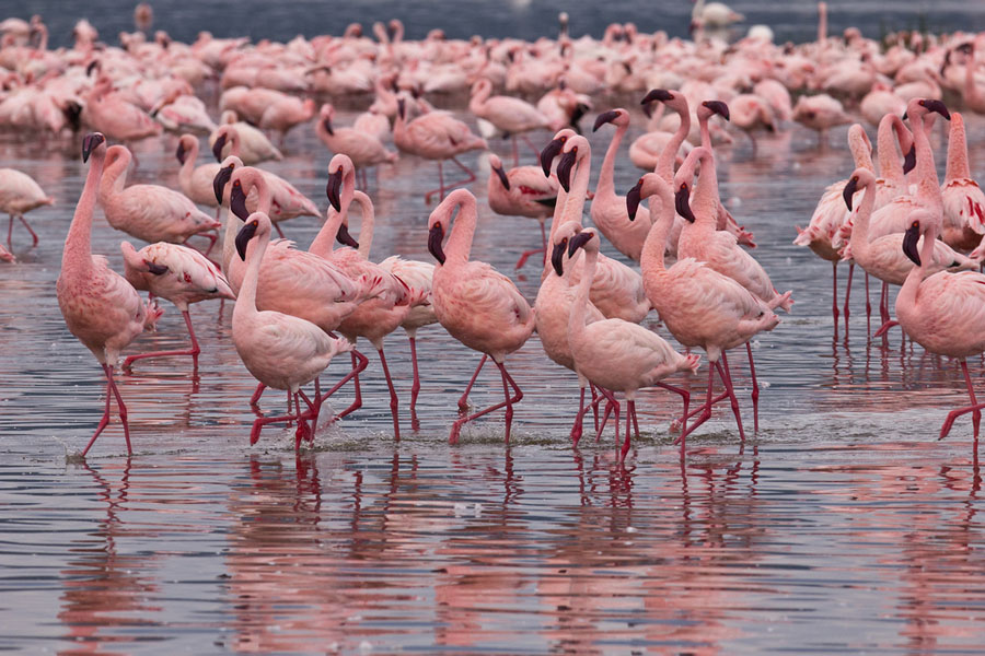 4845967572 775c4bce67 b Миллионы розовых фламинго