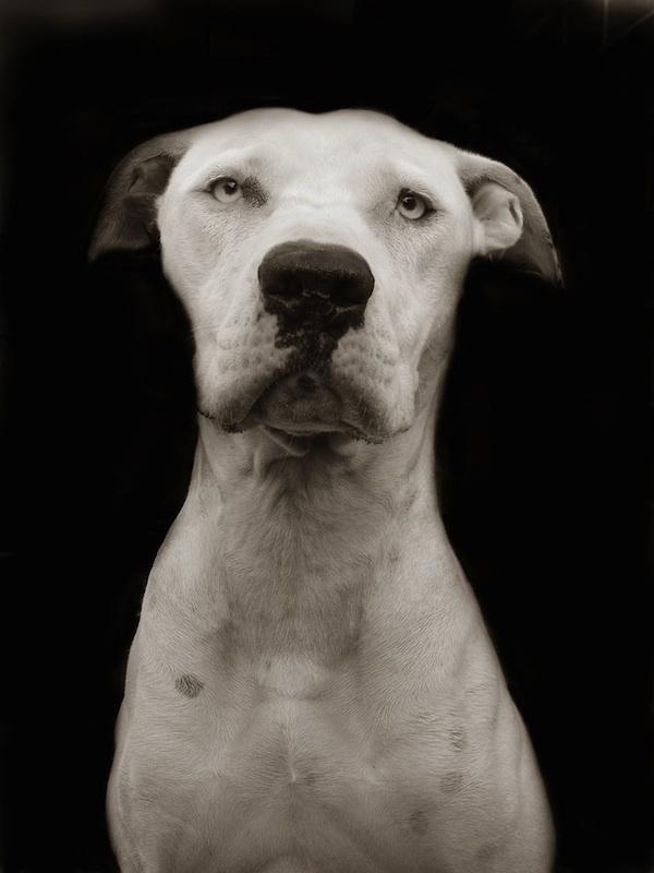 487 Портреты собак из приютов