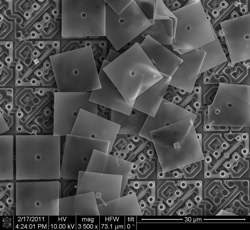 489 Фотографии, сделанные с помощью электронного микроскопа