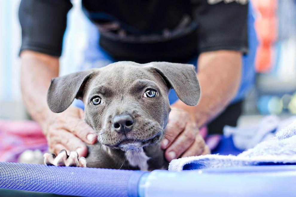 5164 Как любовь и плавание спасли щенка Харпера