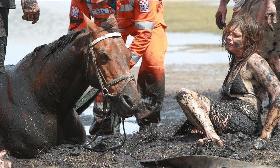5199 Драма на пляже: Спасение лошади
