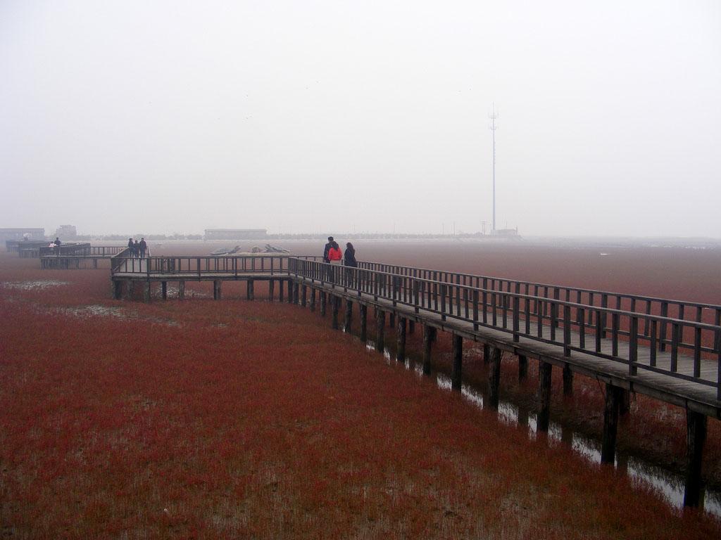 5200954305 195a0c01b7 b Красный пляж в Китае