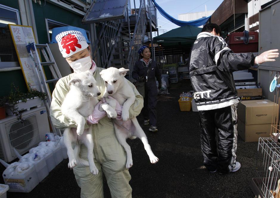 541 Лучшие фото REUTERS за январь