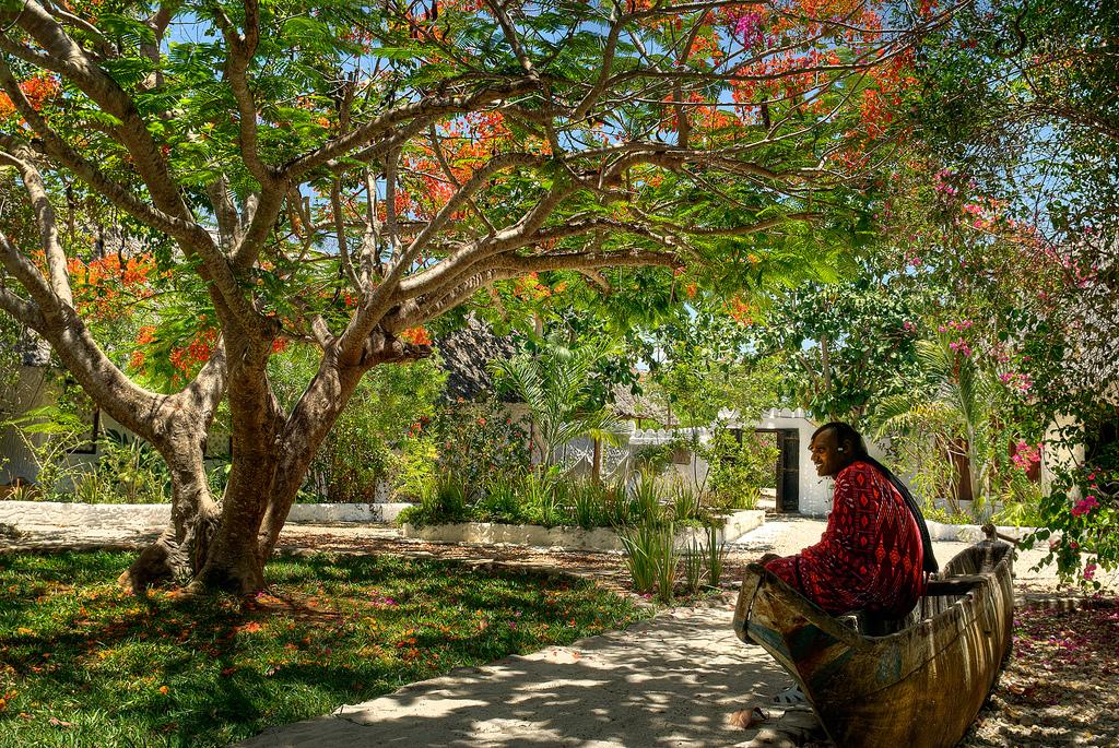 5540514870 d6ba548464 b Экзотическая красота: Африканское тюльпанное дерево