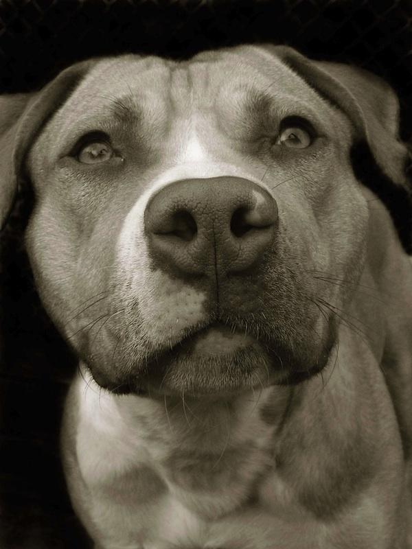 Портреты собак из приютов • НОВОСТИ В ФОТОГРАФИЯХ: http://bigpicture.ru/?p=257126