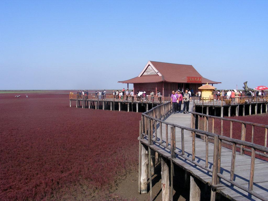 6207115074 6c76f3d9e3 b Красный пляж в Китае