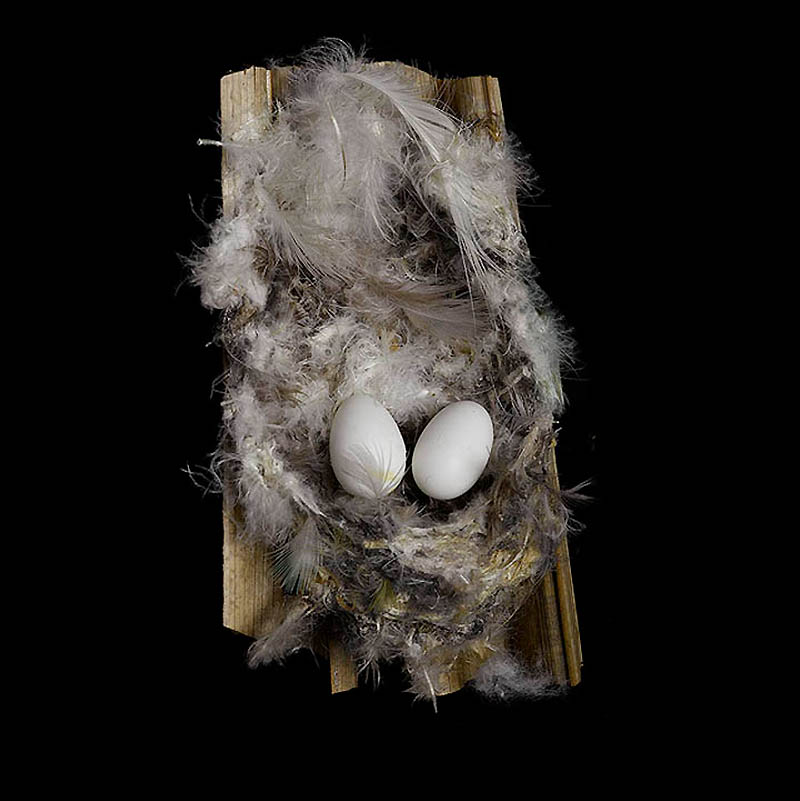 645 Шедевры природной архитектуры   птичьи гнезда