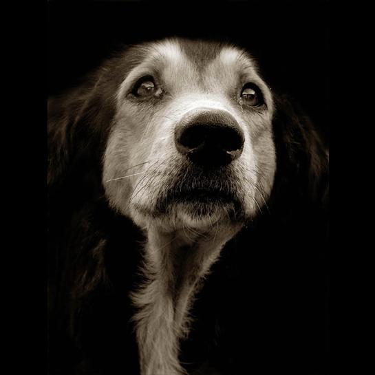 657 Портреты собак из приютов
