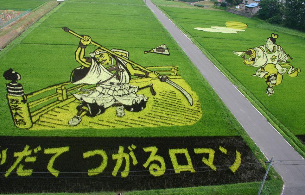 7153 Рисовые поля снизу и сверху