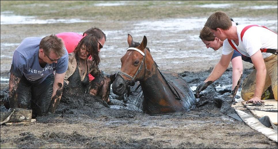 7164 Драма на пляже: Спасение лошади