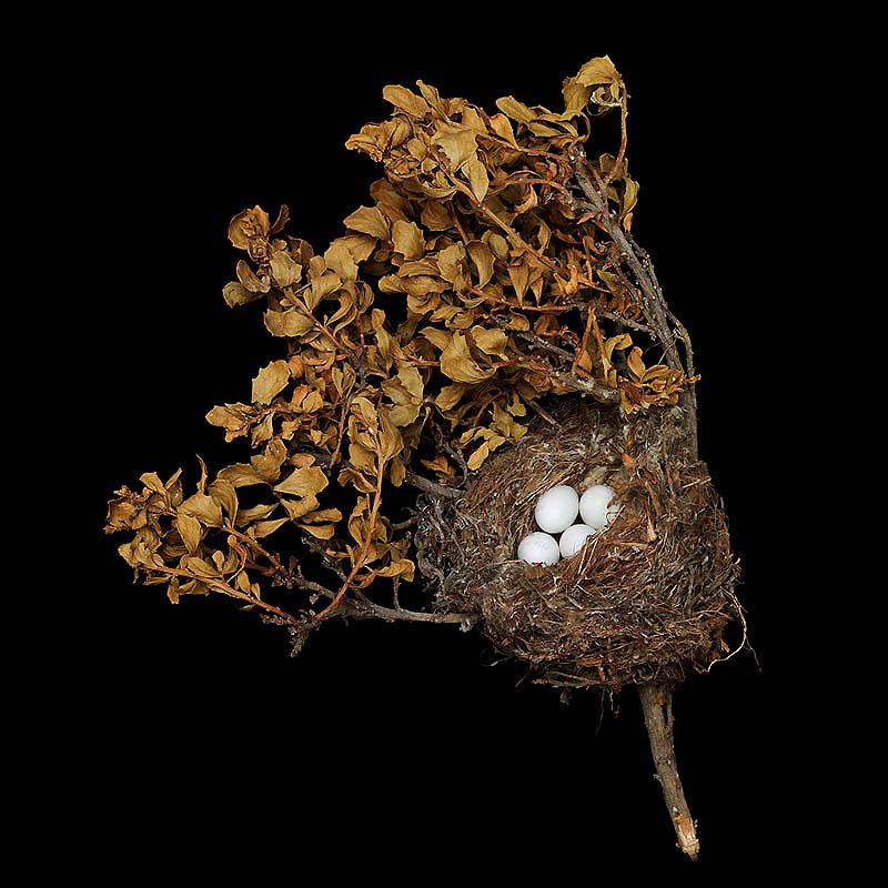 745 Шедевры природной архитектуры   птичьи гнезда