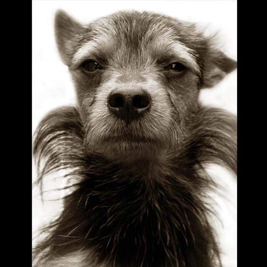 756 Портреты собак из приютов
