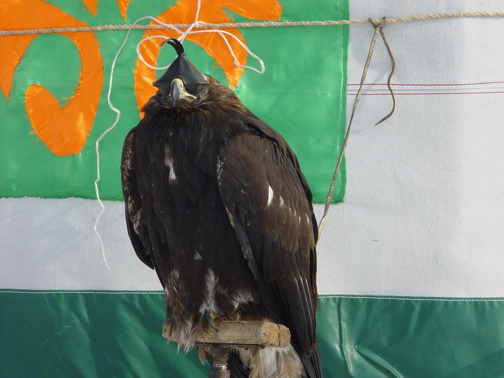781 Фоторепортаж с соревнований по охоте с ловчими птицами