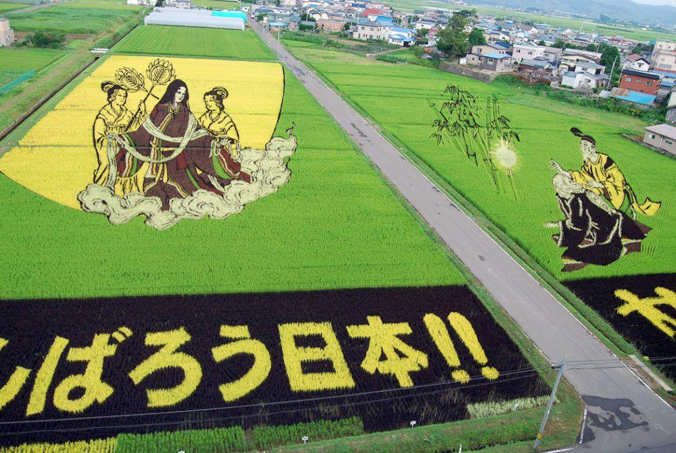 8144 Рисовые поля снизу и сверху