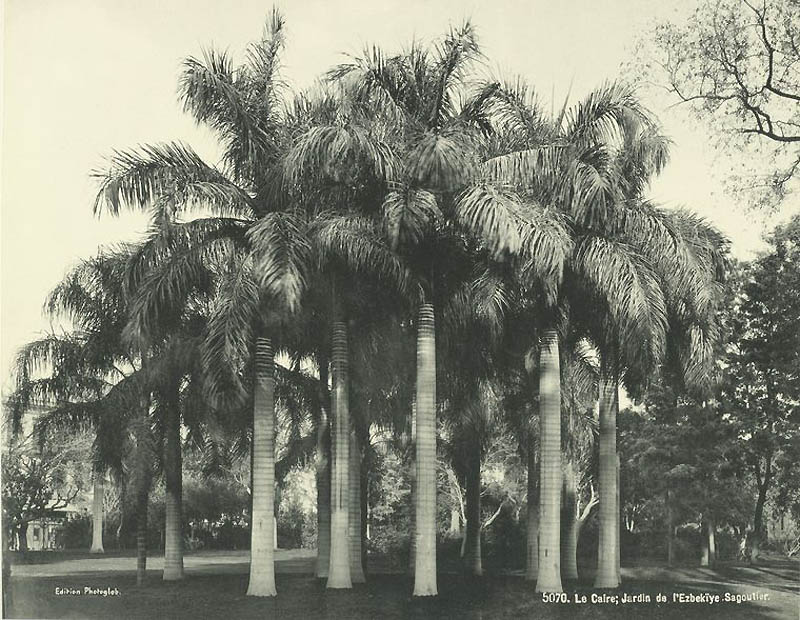 820 Фотографии из Египта 1870 х годов