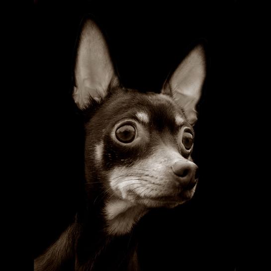 853 Портреты собак из приютов