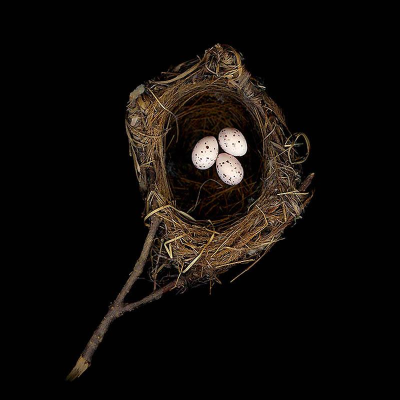 Природной архитектуры птичьи гнезда