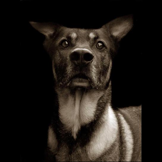 953 Портреты собак из приютов