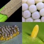 Крупным планом: Яйца насекомых
