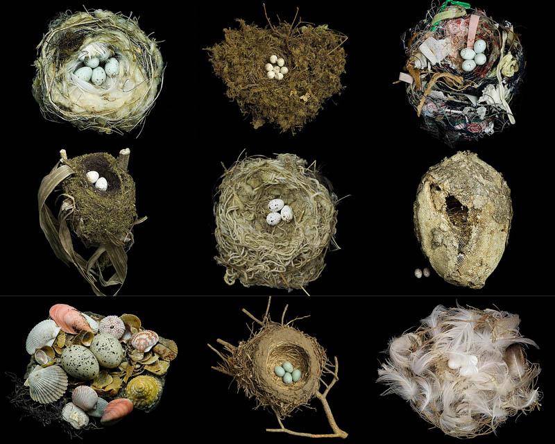 BIGPIC28 Шедевры природной архитектуры   птичьи гнезда