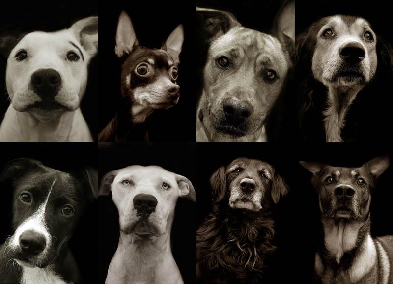 BIGPIC30 Портреты собак из приютов