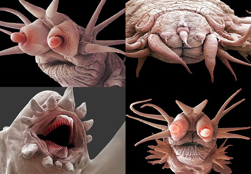 Микромонстры из морских глубин