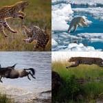 Животные в полете